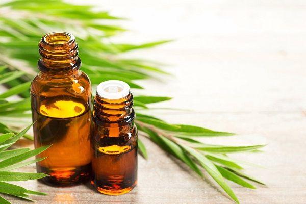 Эфирное масло чайного дерева — полезные свойства и применение для кожи лица